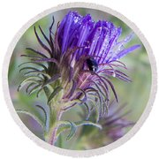 Early Knapweed Round Beach Towel