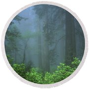 Early Morning In The Forest, Humboldt Round Beach Towel