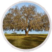 Early Morning Oak Round Beach Towel