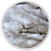 Eastern Bluebird - Old And Alive Round Beach Towel