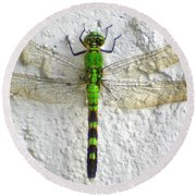 Eastern Pondhawk Dragonfly Round Beach Towel
