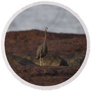 Eastern Reef Egret-dark Morph Round Beach Towel