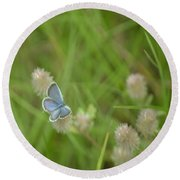 Eastern Tailed Blue Butterfly Round Beach Towel