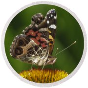 Echinacea Butterfly Meal Round Beach Towel