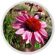 Echinacea In Water Round Beach Towel