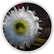 Echinopsis Candicans Round Beach Towel