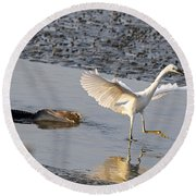 Egret Being Chased By Alligator Round Beach Towel