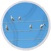 Egrets On A Wire Round Beach Towel