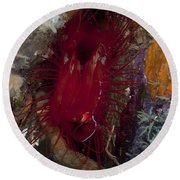 Electric Clam, Lembeh Strait, North Round Beach Towel
