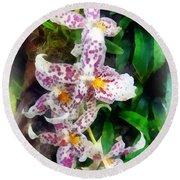 Elegant Beallara Orchid Round Beach Towel