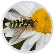 Elegant Hoverfly Round Beach Towel