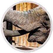 Elephant Feeding Time At The Zoo Round Beach Towel