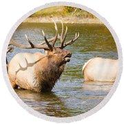Elk Bugle Estes Lake Colorado Round Beach Towel