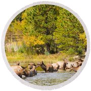 Elk Herd With Autumn Colors Round Beach Towel