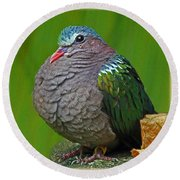 Emerald Ground Dove Round Beach Towel
