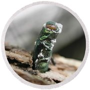 Emerging Ash Borer With Fungus Round Beach Towel