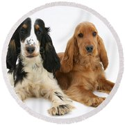 English Cocker Spaniels Round Beach Towel