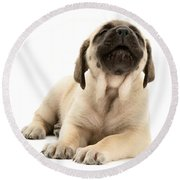 English Mastiff Puppy Round Beach Towel