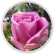 English Pink Rose Close Up Round Beach Towel