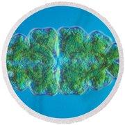 Euastrum Sp. Algae Lm Round Beach Towel