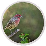 Evening Finch Blank Greeting Card Round Beach Towel