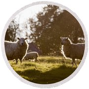 Evening On The Meadow Round Beach Towel
