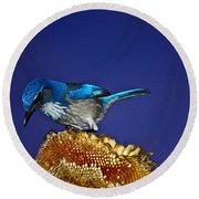 Evening Visitor Round Beach Towel