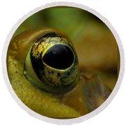 Eye Of Frog Round Beach Towel