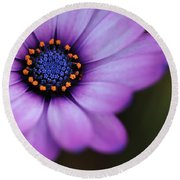 Eye Of The Daisy Round Beach Towel