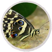 Eye To Eye With A Butterfly Round Beach Towel