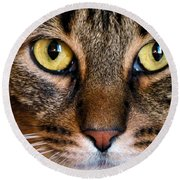 Face Framed Feline Round Beach Towel