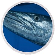 Facial View Of A Great Barracuda, Kimbe Round Beach Towel