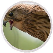 Falcon Round Beach Towel