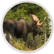 Fall Bull Moose Round Beach Towel