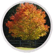 Fall Colored Tree Round Beach Towel