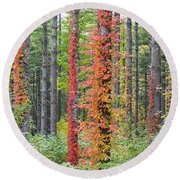 Fall Ivy On The Trees Round Beach Towel
