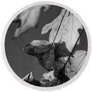 Fall Leaf Light Round Beach Towel