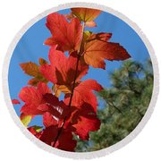 Fall Snowball Branch Round Beach Towel