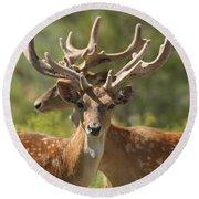 Fallow Deer Dama Dama Stags Round Beach Towel