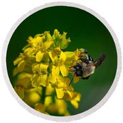 Fanfare For The Common Bumblebee Round Beach Towel