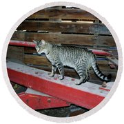 Farm Cat Round Beach Towel