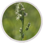 Feathery Reed Canary Grass Vignette Round Beach Towel