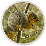Feeding Tree Squirrel Round Beach Towel