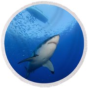 Female Great White, Guadalupe Island Round Beach Towel