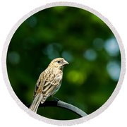 Female House Finch Perched Round Beach Towel