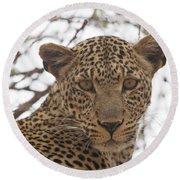Female Leopard Close-up Round Beach Towel