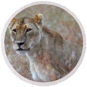 Female Lion Portrait Round Beach Towel