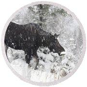 Female Moose In Snowy Forest, Gaspesie Round Beach Towel