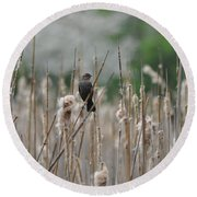 Female Redwinged Blackbird Round Beach Towel