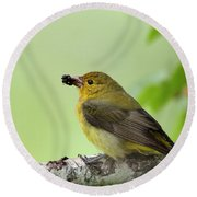 Female Summer Tanager Round Beach Towel